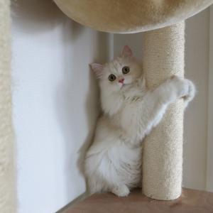 【癒し猫ありがとう】ただ見て癒やされる写真2