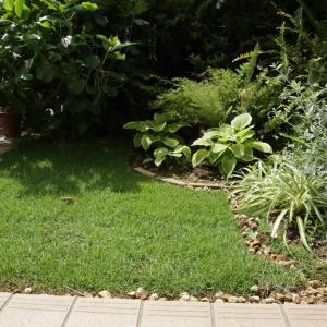 日陰の庭に芝生を植える-選んだ品種は「姫高麗芝」芝張りとお手入れ