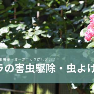 バラの虫除け・害虫の駆除と対策[できれば無農薬・・オーガニック木酢液&スプレー]