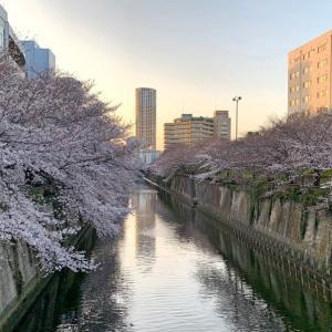 中目黒・目黒川の桜 2021[咲き具合・おすすめ散歩コース・レストランも]