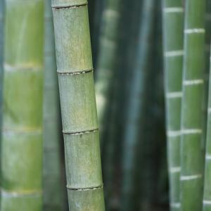 【野外活動】竹でご飯を炊こう(炊飯)