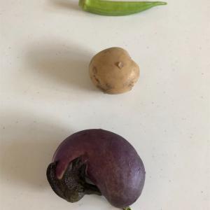 【おうち遊び】野菜でハンコを作ろう! 【スタンプ、連休どうする?】