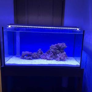 海水水槽立ち上げ③注水とライブロック購入!