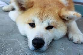 犬 サマーカット 危険