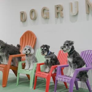 ナッツの兄弟と初対面してきました。 in DOG DEPT GARDEN ヴィーナスフォート店
