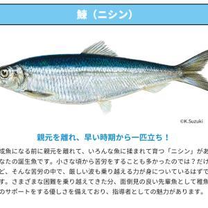誕生魚診断の結果は・・・