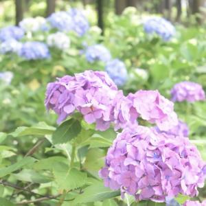 ーIBARAKI FLOWER PARKー