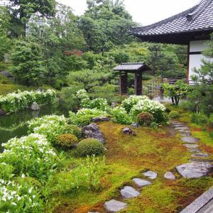 京都、両足院の半夏生を見に行った件