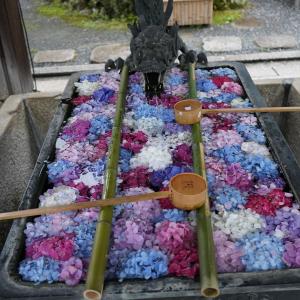 ポリフェノールさんの京都散歩 楊谷寺と花手水