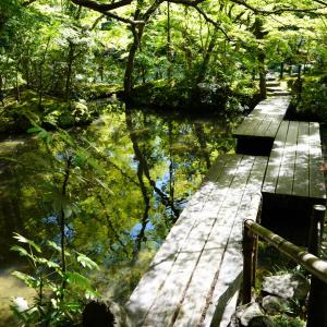 ポリフェノールさんの京都散歩 天寿庵の青紅葉
