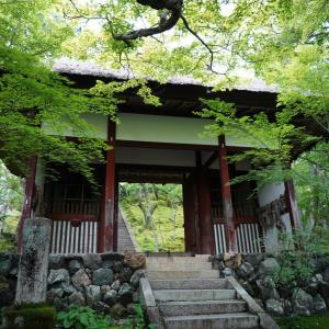 ポリフェノールさんの京都散歩 常寂光寺の緑に包まれて