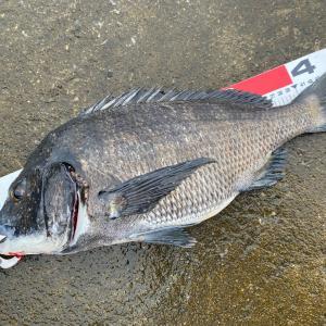 Fishing Order 今日は、いろいろと・・・