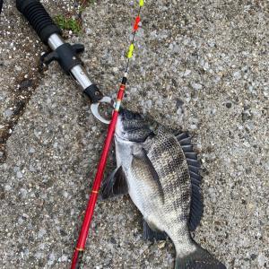 Fishing Order 昨日の釣果