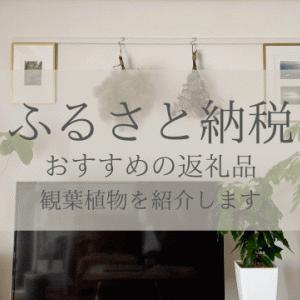 【ふるさと納税】寄付してよかった!おすすめの観葉植物4選