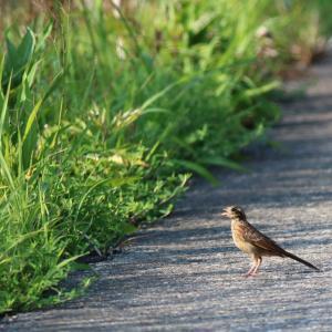 巣立つ幼鳥