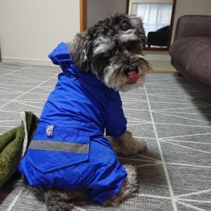 【梅雨中の散歩】愛犬のさんぽはどうしてる?長雨つづきの対処方法