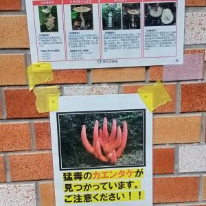 近所の公園に猛毒キノコ発生!「人」も「犬」も死ぬ可能性あり!絶対に近づかないでください!