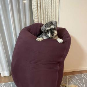 【Yogibo】ヨギボーは犬が利用しても大丈夫?噛む?掘る?爪は?利用者が実情をお知らせします