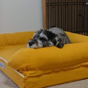 【犬のベッド】おしゃれでかわいい!噛んでも大丈夫!丈夫で洗えるおすすめベッドは?