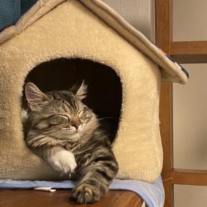 【猫初心者】これから猫を迎える方へ、はじめての猫グッズ