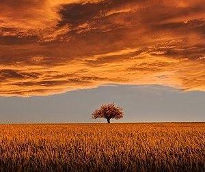 稲穂(スピッツ)に広がる黄金色。美しく優しい夕焼けの秋空を読み解く
