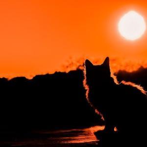 スピッツの大宮サンセットの世界。温かい夕日が照らす、二人のこころを考える