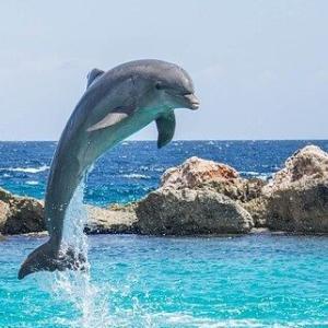 スピッツの「ドルフィン・ラヴ」。イルカを見つめるトカゲの恋