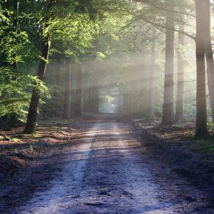 森が心身を癒やしてくれる?森林セラピーとは何か