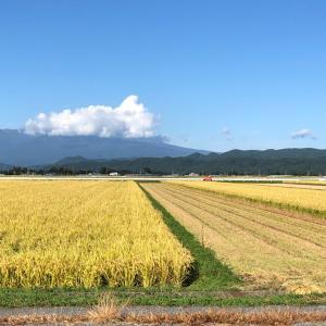 稲刈りの季節がやってきました