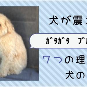 保護中: 犬が震える!7つの原因と理由を解説