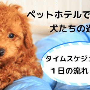 ペットホテルで犬はどう過ごしているのか?ペットホテルの1日の流れを紹介