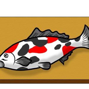 まな板の上の鯉