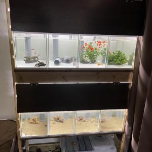多段オーバーフロー水槽DIY⑤
