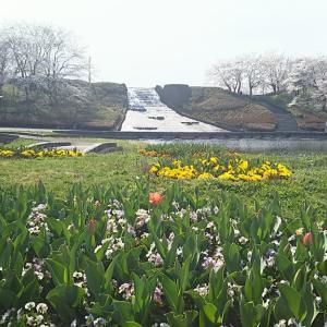 春の「みちのく杜の湖畔公園」