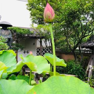 鎌倉をトコトコ歩いて成就院