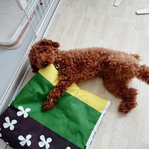 IKEAの生地で犬用の座布団作りました。