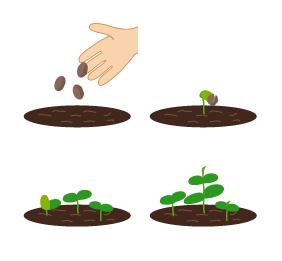 農家の播種作業は大変?大事な種まき作業に時間をかけるべき理由3選