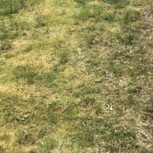【苔、雑草、冬の管理法等】芝生で困った時の対処法
