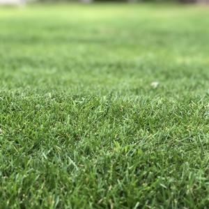【究極の時短】生い茂った雑草処理は業者にお願いして解決しちゃいましょう