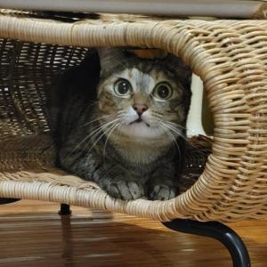 【IKEA長久手行ってきた①】猫グッズとして売られていない神猫グッズがあるらしい。