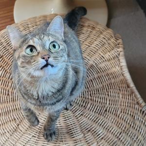 【IKEA長久手行ってきた③】続・GAMLEHULT(ガムレフルト・オットマン)と猫飼いに優しい布団カバー