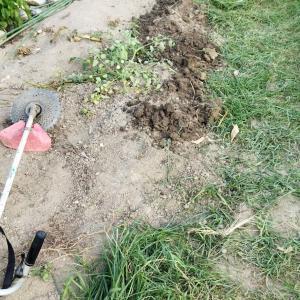 刈払機の試運転を兼ねて草刈しました