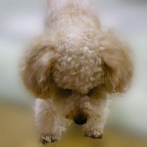 愛犬の旅立ち後、初めて夢の中で抱っこできました