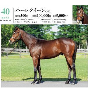 シルク 2021募集馬 関西馬候補