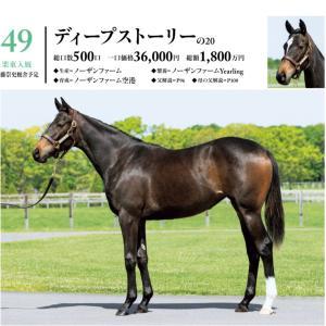 シルク 2021募集 応募した馬