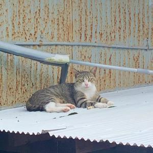 「お盆」と「ノラ猫一家」」