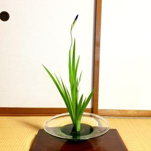 生け花教室「カキツバタの一種生け」と「ガマとカワラナデシコ・魚道生」