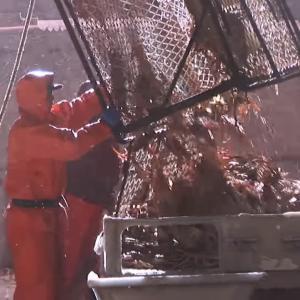 カニ漁師、2ヶ月で年収1000万円
