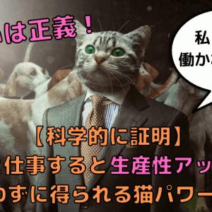 【科学的に証明】猫と仕事すると生産性アップ!飼わずに得られる猫パワー3選