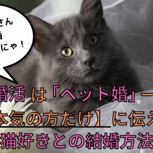 猫婚活は「ペット婚」一択!本気の方だけに伝える猫好きとの結婚方法
